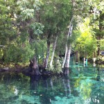 Crystal River Manatees4_(c) Wiebke Flegel-Wulf